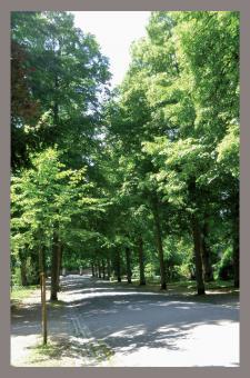 Trauerkarte - Coburger Friedhof, Hauptallee